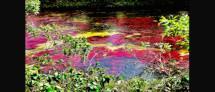 תערוכת צילומים :נופים קסומים בשלל צבעים